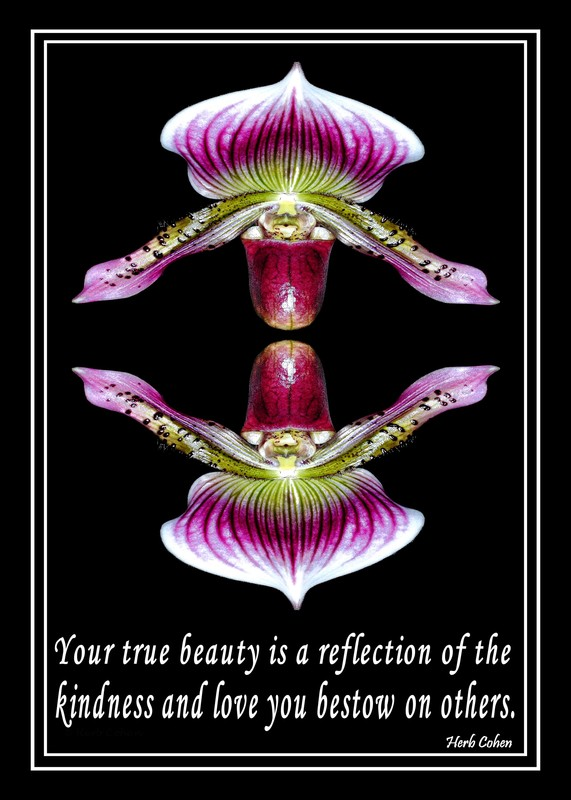 Your true beauty is a reflection of the kindness and love you bestow on others