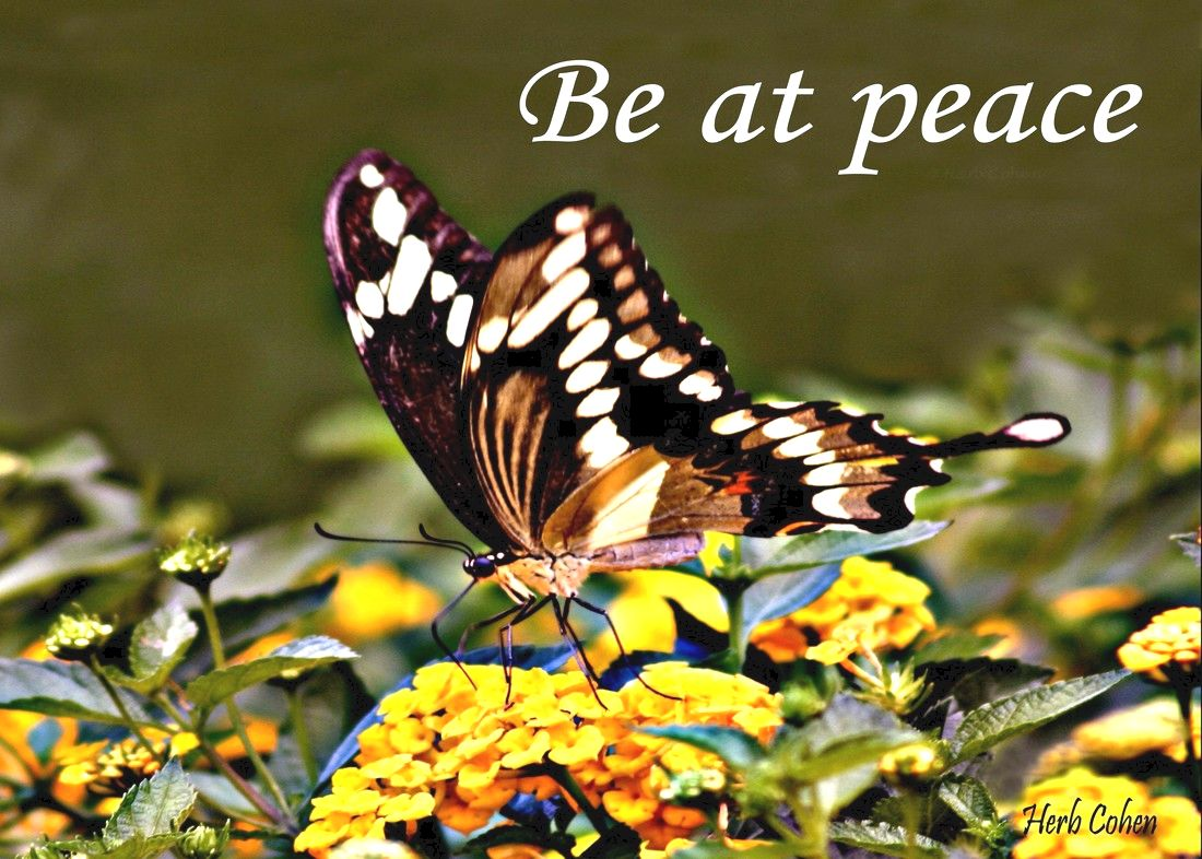 Our life is a journey towards the serenity of peace for its our positive feelings that inspire our actions towards the life we truly desire Monument of Gratitude  Our life is a journey towards the serenity of peace for it's our passion and determination that will guide us and inspire us towards the life we truly desire It's our positive feelings that inspire our actions towards the life we truly desire The Universe of Importance is about uniting to create positive changes in our world that focus on helping others while breaking-down the barriers of those who are fixated on highlighting our differences We are all unique and special individuals who deserve to experience the positive feelings of happiness, success, love, harmony and especially, the serenity of peace Our journey towards the serenity of peace is a reflection of our openness to totally appreciate the blessings of happiness, success, love, and harmony in our lives