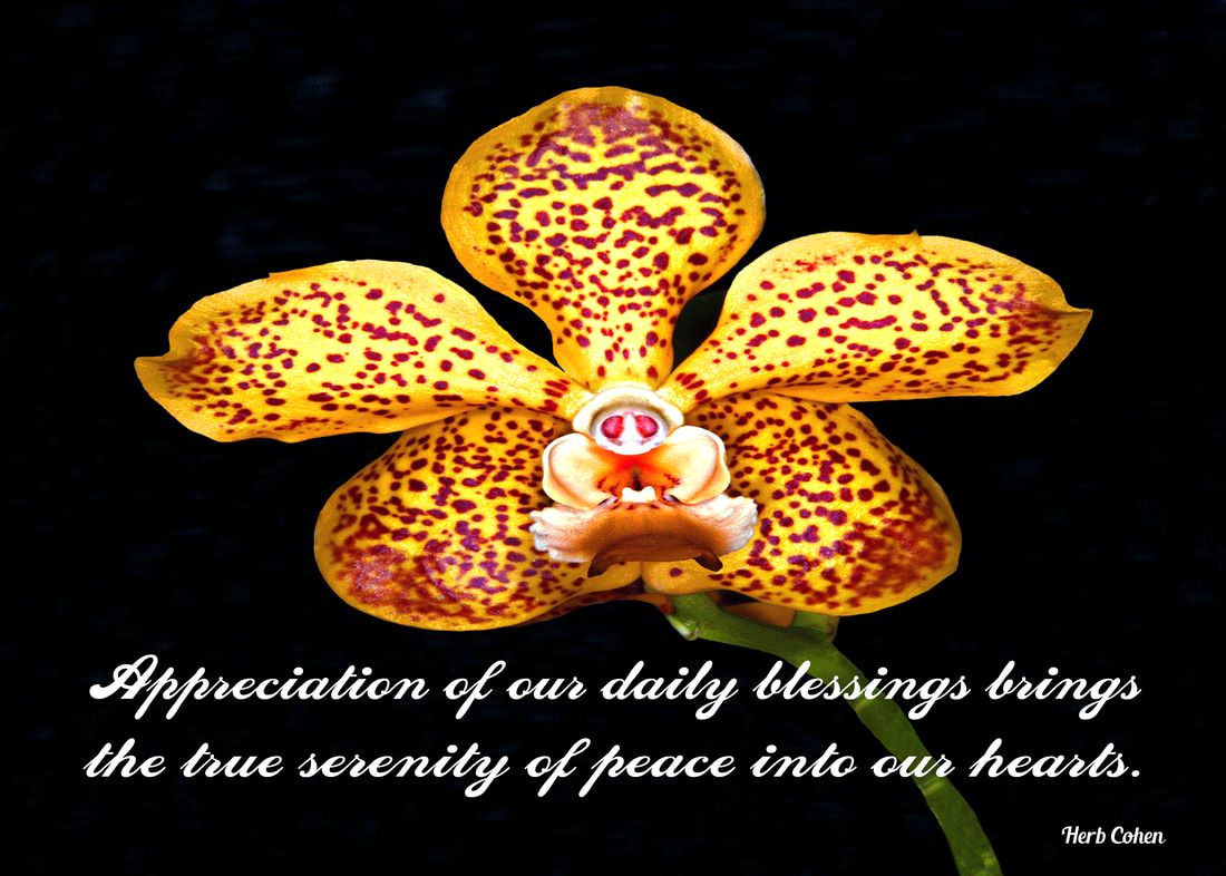 Appreciation of our daily blessings brings the true serenity of peace into our hearts