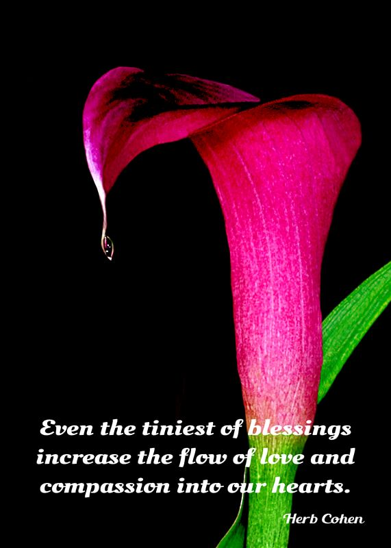 Even the tiniest of blessings increase the flow of love and compassion into our hearts